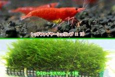 画像2: 【エビ】【シュリンプ】レッドファイヤーシュリンプ10匹(1.2-1.5cm)&国産無農薬ウィローモスマット1枚(生体)(淡水) (2)