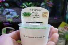 画像1: 【水草】トロピカ社 ヨーロピアン クローバー(組織培養)1カップ (1)