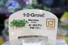 画像2: 【水草】トロピカ社 ヨーロピアン クローバー(組織培養)1カップ (2)
