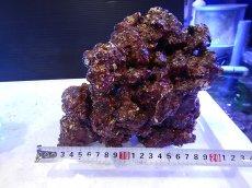 画像3: 【ライブロック】リアルリーフロック(M)  Real Reef Rock (1kg)(生体)(海水魚)(サンゴ) (3)