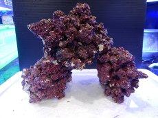画像4: 【ライブロック】リアルリーフロック(M)  Real Reef Rock (1kg)(生体)(海水魚)(サンゴ) (4)