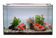 画像2: 【飼育用品・器具】【照明器具】【LEDライト】ZENSUI LED PLUS 30cm パーフェクトクリアー(淡水海水用)(メーカー保証付き) (2)