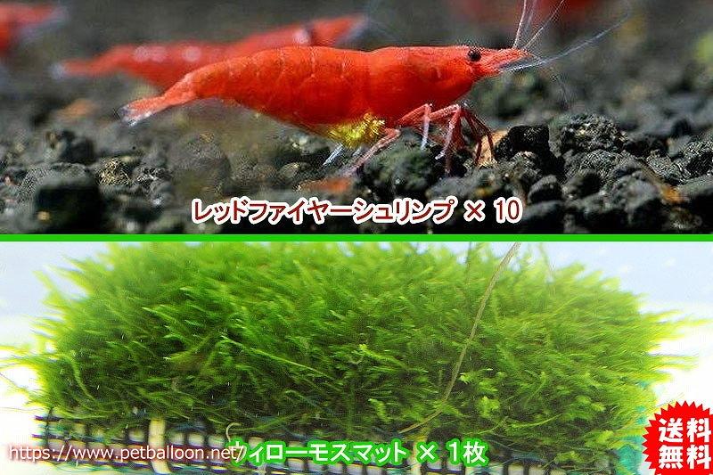画像1: 【エビ】【シュリンプ】レッドファイヤーシュリンプ10匹(1.2-1.5cm)&国産無農薬ウィローモスマット1枚(生体)(淡水) (1)