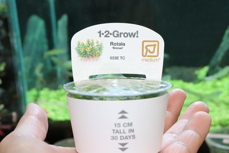 画像1: 【水草】(組織培養)トロピカ社 ロタラ ボンサイ(無農薬)【1カップ】 (1)